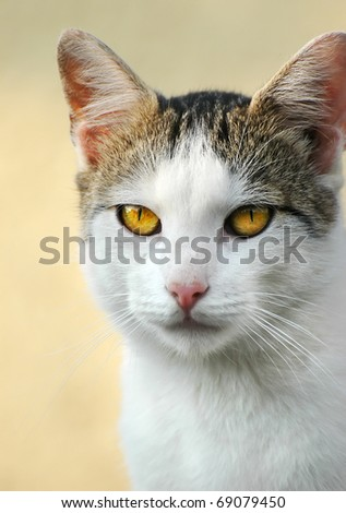 The black and white cat with yellow eyes