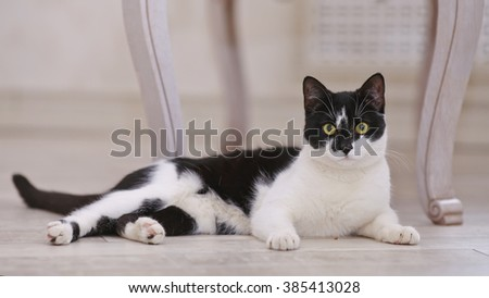 The black-and-white domestic cat lies on a floor. - stock photo