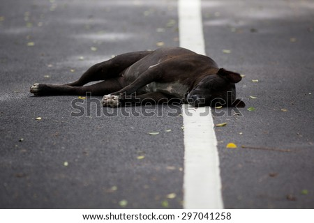 Dead dog Stock Photos, Images, & Pictures | Shutterstock