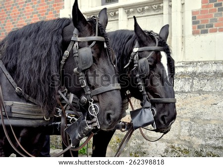 The black horses in Paris