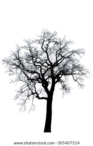 The black silhouette of a tree on a white background / oak