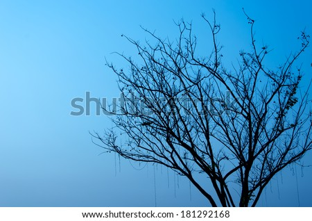 The black tree on the blue background - stock photo