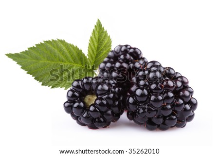 The blackberry berry is isolated on a white background - stock photo