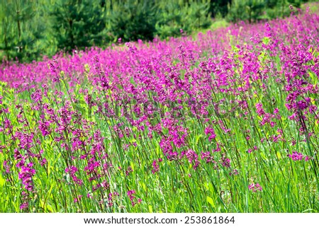 the blossoming summer meadow with flowers - stock photo