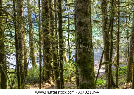 The blue and green waters of Lake Crescent seen through the rainforest in Olympic National Park, Washington - stock photo