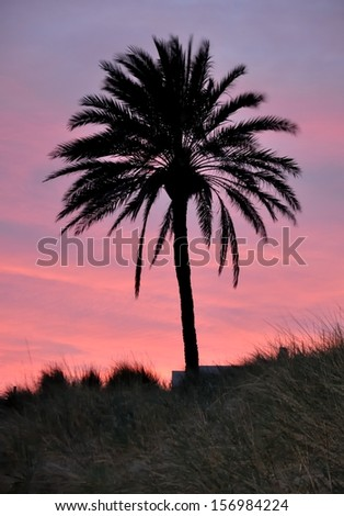 The blue and red colors of the sunset in front of a palm tree - stock photo
