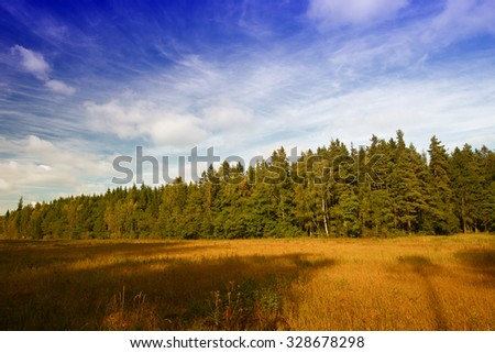 The blue sky over a forest edge. Nature landscape