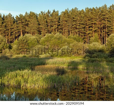 The blue sky, the green wood and meadow with a grass, the like in the summer - stock photo