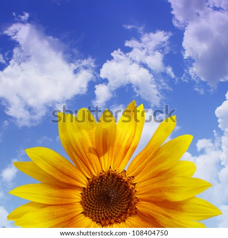 The blue sky with sunflower, background - stock photo