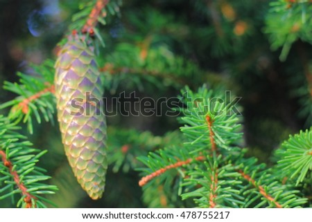 The blurry image with fir tree paws and new green single cone.
