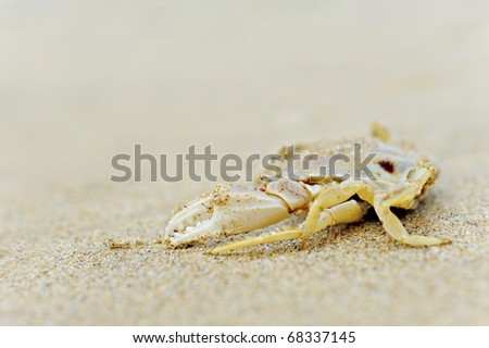 The body of a dead crab on an empty beach