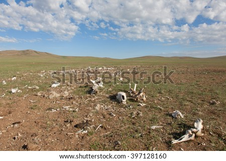 The bones of dead animals in the desert - stock photo