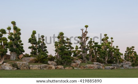 The bonsai trees in garden with blue sky - stock photo