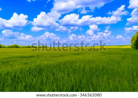 The boundless green field with a crop of rye under blue sky with clouds