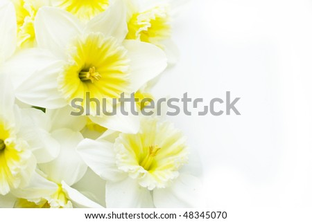 the bouquet of narcissus