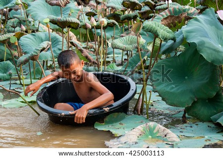 The boy is harvesting the lotus in the field preparation for distribution.