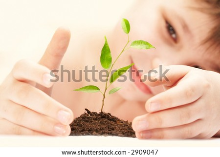 The boy observes cultivation of a young plant. - stock photo