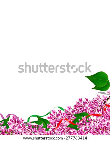 The branch of blooming lilacs isolated on white background - stock photo