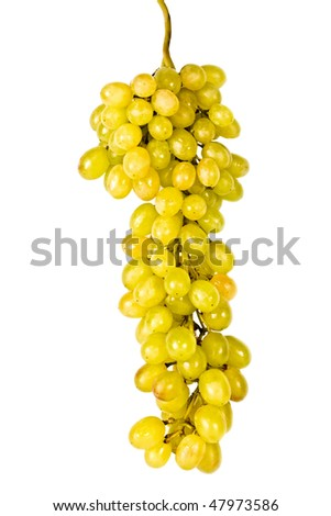 The branch of grapes isolated, on a white background