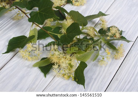 The branch of linden blossoms on a wooden board - stock photo