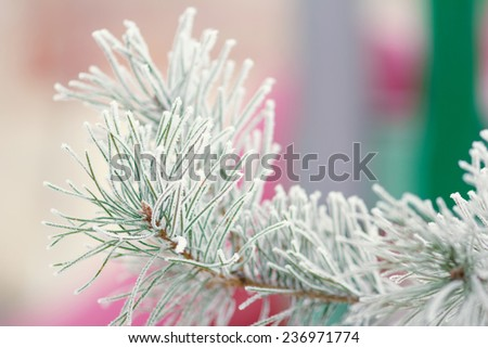 The branch of spruce or pine tree covered with snow. Winter forest, nature, winter, frost, frosty day - the concept for the New Year greeting card or background image for the winter season. Winter. - stock photo