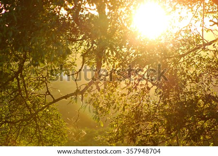The branches of a tree, backlit by a golden sunset. - stock photo