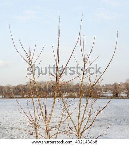 The branches of a tree on the background of a frozen lake.