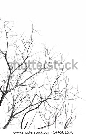The branches of dead tree isolated on white background - stock photo