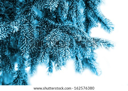The branches of spruce in frost - stock photo