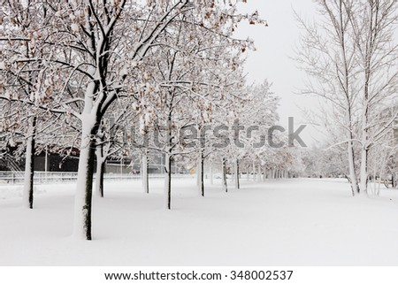 The branches of trees in the snow in the winter