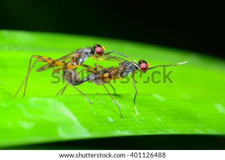 The breeding of insects in the forest. - stock photo