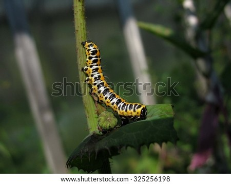The bright caterpillar on steam of a plant - stock photo