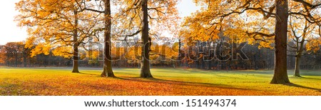 The bright colors of autumn trees. Dry leaves in the foreground. Autumn landscape. Panorama. - stock photo