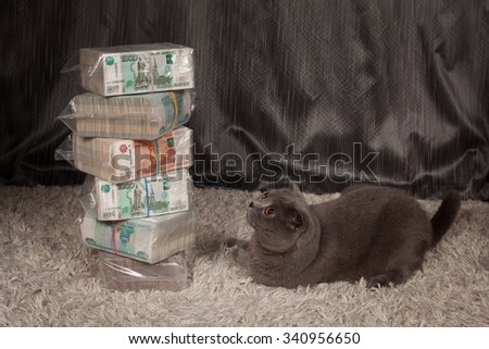 the British cat and is a lot of Russian money  - stock photo