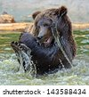 The brown bear is bathed in water - stock photo