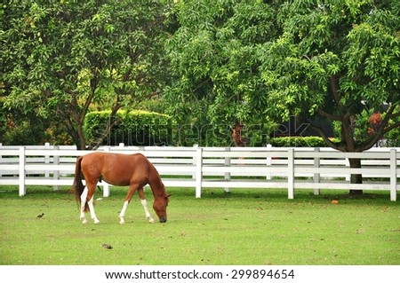 the brown horse is grazing the grass inside the stable in Titiwangsa Lake Garden in Malaysia - stock photo