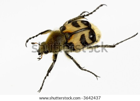 The bug - stock photo
