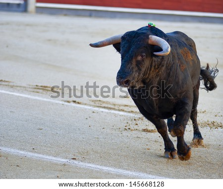 The bull running during a bullfight in Madrid. Plaza de Toros de las Ventas. Spain - stock photo