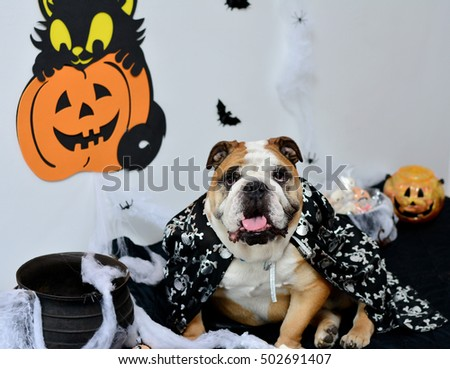 The Bulldog halloween party