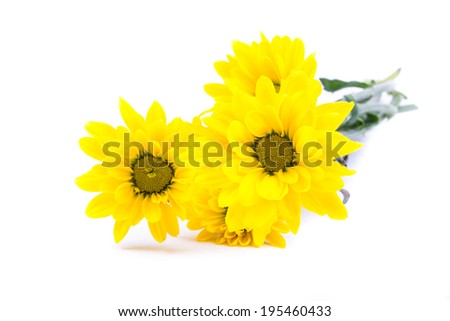 the bunch of gorgeous yellow flowers on the white background ideal for decoration