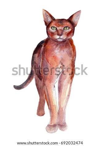 The burma cat, watercolor illustration isolated on white background.