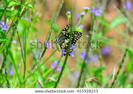 the butterfly and flowers in the natures