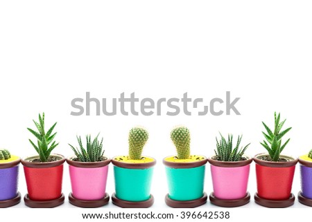 The cactus on a white background (space for text).