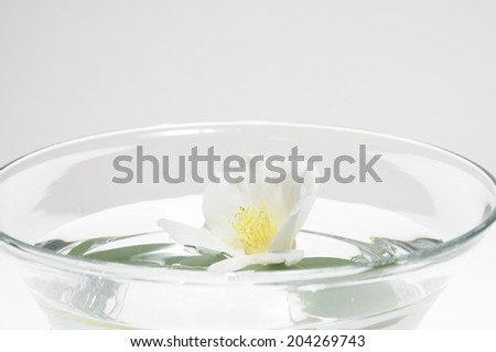 The Camellia Bloomed In A Water Bowl