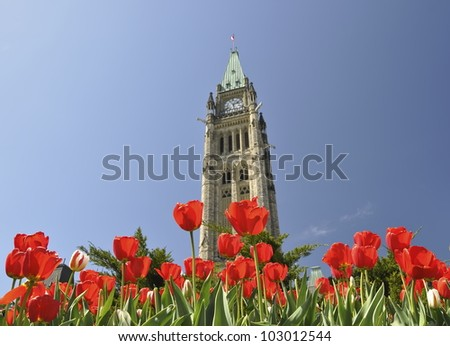 The Canadian Parliament Building framed by Red Tulips in the Spring in Ottawa, Ontario � the nation's capital. Canadian Tulip Festival in Ottawa, Canada.  The focus is on tulips. - stock photo