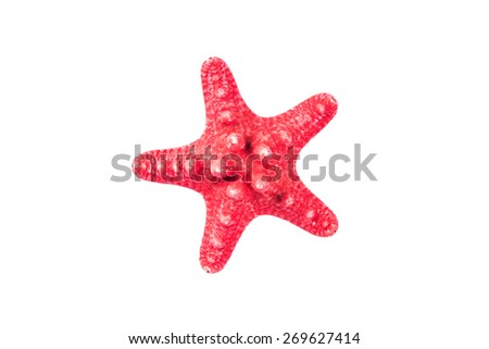 The Caribbean starfish - stock photo