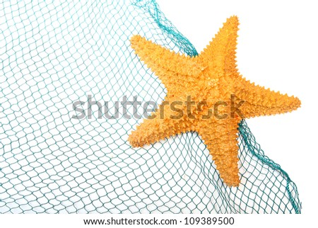 The caribbean starfish on a fishing net. - stock photo