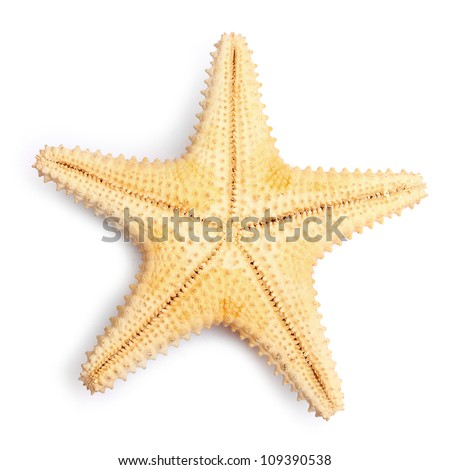 The caribbean starfish on a white background. - stock photo