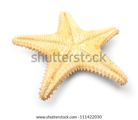 The caribbean starfish on a white background. Close up with shallow DOF. - stock photo