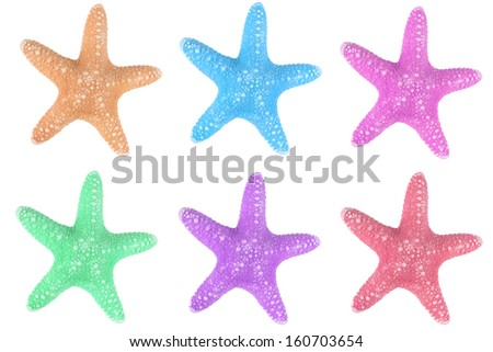 The caribbean starfishes on a white background.  - stock photo